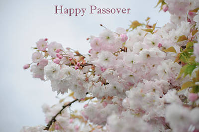 Photograph - Happy Passover by Tikvah's Hope