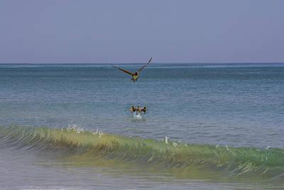Pelican Photograph - Happy Pelicans by Zina Stromberg