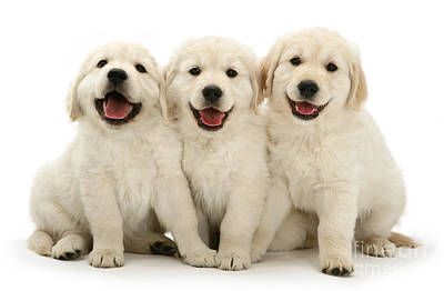 Photograph - Happy Puppies by Warren Photographic