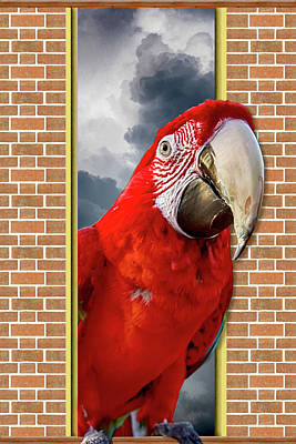Photograph - Happy Red Parrot by John Haldane
