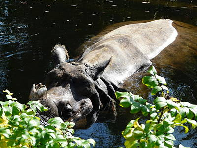 Photograph - Happy Rhino by Valerie Ornstein