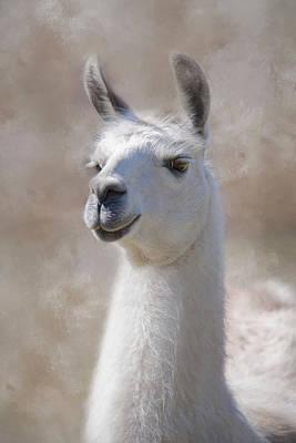 Llama Photograph - Happy by Robin-Lee Vieira