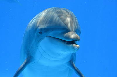 Happy Smiling Dolphin Art Print