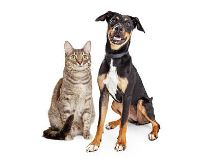 Rights Managed Images - Happy Smiling Tabby Cat and Crossbreed Dog Royalty-Free Image by Good Focused