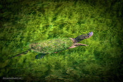 Photograph - Happy Snapping Turtle by LeeAnn McLaneGoetz McLaneGoetzStudioLLCcom