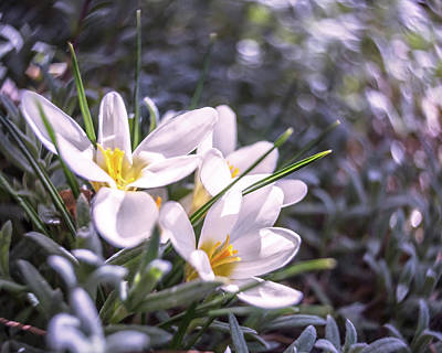 Photograph - Happy Spring by Jennifer Grossnickle