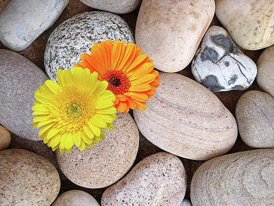Photograph - Happy Summer Memories - Sunshine Daisies And Pebbles On The Beach by Gill Billington