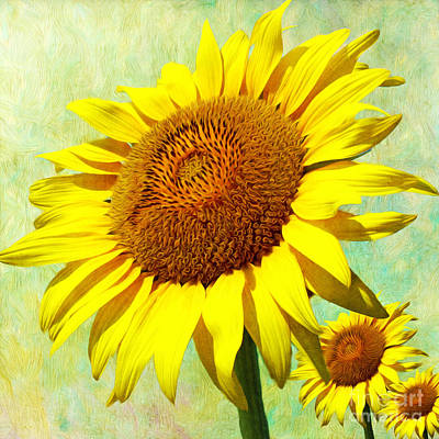 Annual Photograph - Happy Sunflower Day by Laura D Young