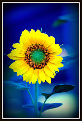Photograph - Happy Sunflower by Shayne Johnson Fleming