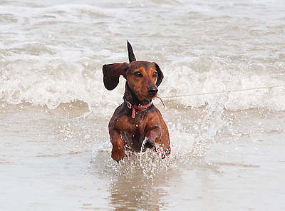 Water Play Photograph - Happy Surf Dog by Kenneth Albin