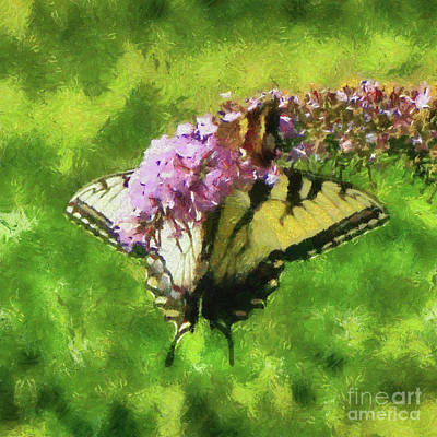 Photograph - Happy Swallowtail Butterfly by Betsy Foster Breen