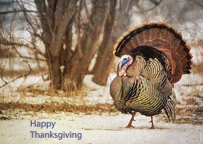 Photograph - Happy Thanksgiving Turkey Card by Patti Deters
