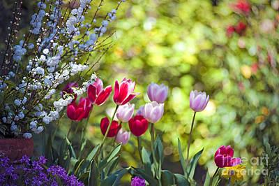 Photograph - Happy Tulips by David Zanzinger