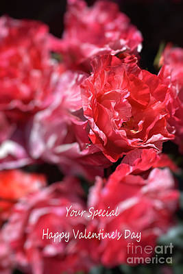 Photograph - Happy Valentine's Day Your Special by Joy Watson