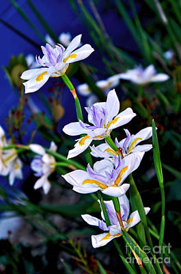 Happy Wild Iris Art Print by Kaye Menner
