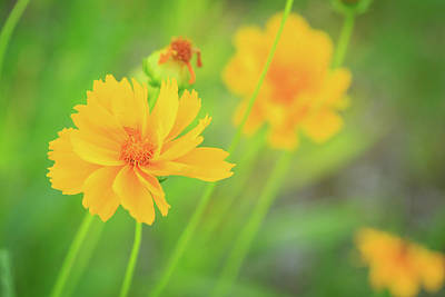 Photograph - Happy Yellow Flowers by Joni Eskridge