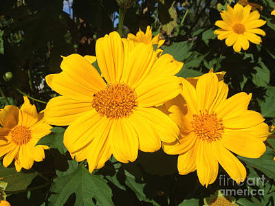 Photograph - Happy Yellow by LeeAnn Kendall