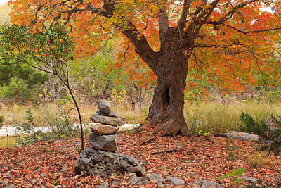 Lost Maples State Park Print, Happy's Maple Art Print by Mike Brymer