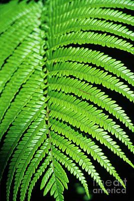 Hapuu Photograph - Hapu'u Fern II by Charmian Vistaunet