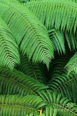 Hapuu Photograph - Hapuu Ferns by William Waterfall - Printscapes