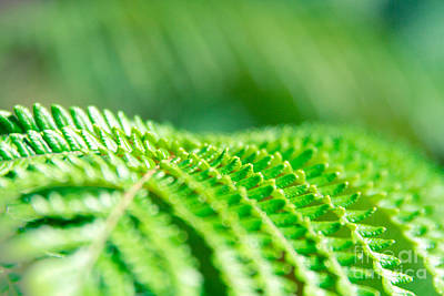 Photograph - Hapuu II Hawaiian Tree Fern by Sharon Mau