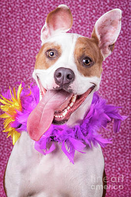 Photograph - Hapy Dog by Stephanie Hayes