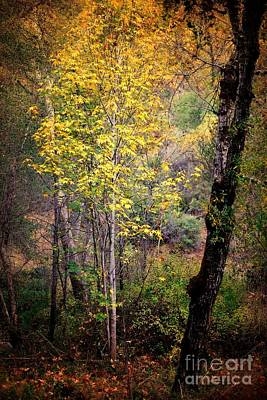 Photograph - Harbinger Of Autumn by Parrish Todd