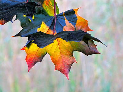 Lightscapes Photograph - Harbinger Of Autumn by Sean Griffin