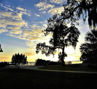 Photograph - Harbor Oaks by Ric Schafer