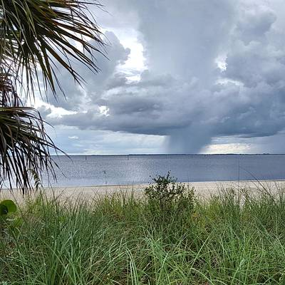 Grass Photograph - Harbor Rains by Ric Schafer