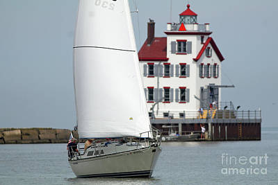 Photograph - Harbor Sailor by Debbie Parker