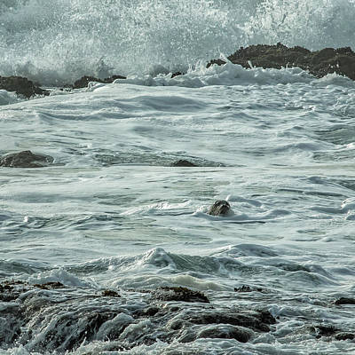 Photograph - Harbor Seal by Belinda Greb