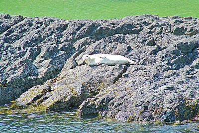 Photograph - Harbor Seal By Tide Pool In Yaquina Head Outstanding Natural Area In Newport, Oregon by Ruth Hager