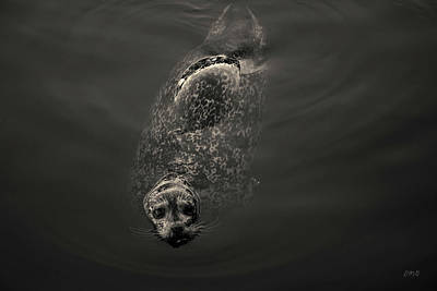 Photograph - Harbor Seal II Toned by David Gordon
