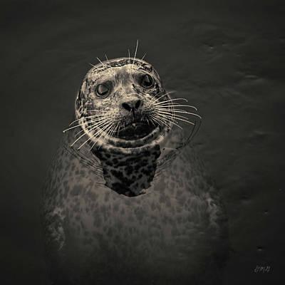 Photograph - Harbor Seal IIi Toned Sq by David Gordon