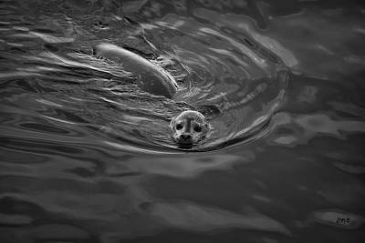 Photograph - Harbor Seal Iv Bw by David Gordon