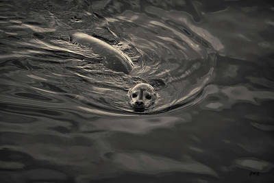 Photograph - Harbor Seal Iv Toned by David Gordon