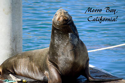 Pilings Painting - Harbor Seal Morro Bay California by Floyd Snyder