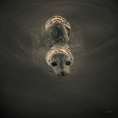 Photograph - Harbor Seal V Bw Sq Toned by David Gordon
