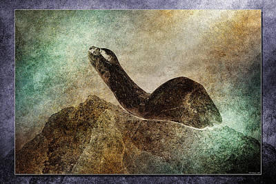 Photograph - Harbour Seal by WB Johnston