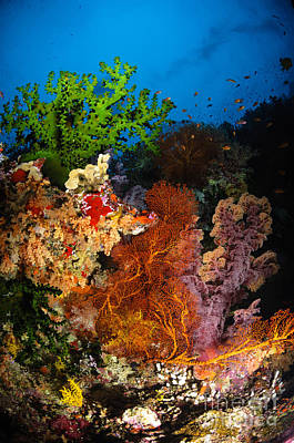 Undersea Photograph - Hard Coral And Soft Coral Seascape by Todd Winner