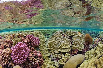 Hard Coral Carpets A Shallow Seafloor Art Print