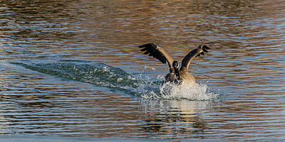 Art Print featuring the photograph Hard Landing by Yeates Photography