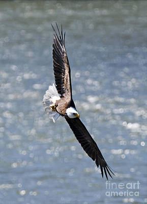 National Symbol Photograph - Hard Left by Mike Dawson