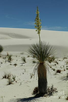 Photograph - Hard Life In The Desertsun  by Christiane Schulze Art And Photography
