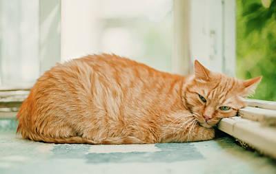 Ginger Cat Photograph - Hard Life Of A Ginger Cat by Oksana Ariskina