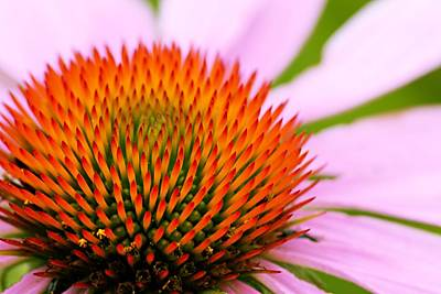 Photograph - Hard Spikes And Soft Petals by Larry Ricker