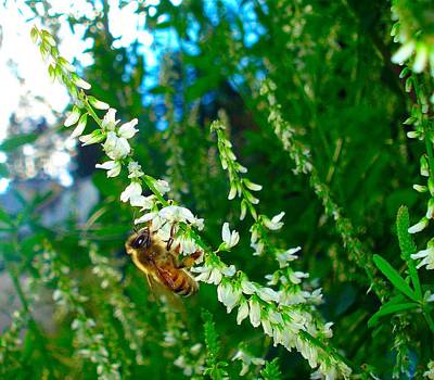 Photograph - Hard Working Bee by Michael Dohnalek