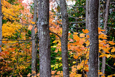 Photograph - Hardwoods And Leaves by John McArthur
