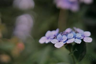 Photograph - Hardy Blue by Gene Garnace